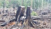 Phê chuẩn khởi tố 2 trưởng Ban quản lý rừng phòng hộ ở Gia Lai