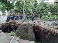 Bão số 5 ập vào miền Trung, 1 người chết, 23 người bị thương