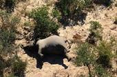 Tiết lộ bất ngờ về nguyên nhân khiến voi hoang dã ở Botswana lăn ra chết hàng loạt