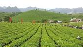 20 000 ha đất nông, lâm trường quốc doanh bị   lấn chiếm
