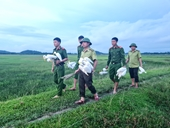 Ngăn chặn nạn tận diệt chim, cò hoang dã ở huyện Hương Sơn