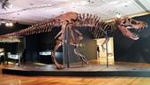 Choáng với hóa thạch khủng long bạo chúa được bán với giá kỉ lục gần 740 tỉ đồng