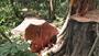 Để mất rừng, 3 cán bộ lâm nghiệp bị kỉ luật sa thải