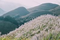 Tháng 10, về thiên đường Bình Liêu ngắm lau trắng ngút ngàn