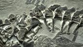 Tìm thấy xương ngư long hóa thạch cực hiếm ở vùng Viễn Đông của Nga