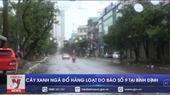 Bão số 9 Cây xanh ngã đổ hàng loạt tại Bình Định
