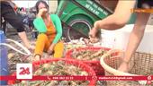 Tôm hùm chết hàng loạt, người dân Phú Yên ôm mặt khóc ròng
