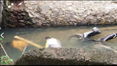 Phát hiện thi thể 2 đàn ông tử vong bí ẩn dưới mương nước