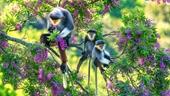 """Ảnh đẹp cuộc thi """"Sáng tác ảnh về môi trường và đa dạng sinh học TP Đà Nẵng"""""""