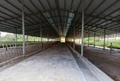 Vì sao dự án nuôi bò 2 600 tỉ đồng lại chuyển sang dự án nuôi heo 254 tỉ đồng