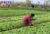 Người dân Đà Nẵng tập trung khôi phục sản xuất sau bão lụt