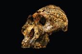 Phát hiện hóa thạch hơn 2 triệu năm tuổi của họ hàng tổ tiên loài người