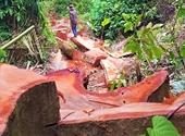 Phát hiện vụ phá rừng quy mô lớn ở khu bảo tồn thiên nhiên Ea Sô