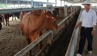 """Hàng loạt thất bại và nhiều sai phạm tại dự án """"nuôi bò"""" 224 tỉ đồng"""