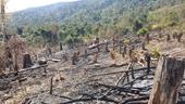 Hàng loạt cán bộ, đảng viên bị kỷ luật vì để đất rừng bị lấn chiếm