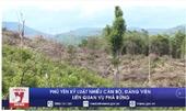 Phú Yên kỷ luật nhiều cán bộ, đảng viên liên quan vụ phá rừng