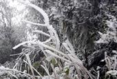 Đêm nay không khí lạnh tràn về, Bắc Bộ rét buốt, nhiều nơi có mưa