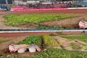 Báo Thái Lan sốc với hình ảnh rau được trồng bên trong sân Lạch Tray