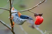 Vẻ đẹp lộng lẫy của các loài chim hoang dã