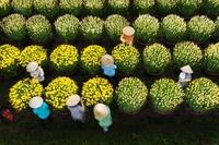 Choáng ngợp cảnh sắc tuyệt đẹp trong vựa hoa lớn nhất ở Đồng Nai