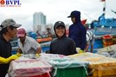 Chuyến biển cuối năm đầy vị ngọt của ngư dân miền Trung