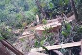 Phá rừng, cưa hạ 11 cây gỗ bán lấy tiền  tiêu Tết