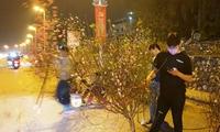 Thị trường cây cảnh 30 Tết Trưa ảm đạm, tối đìu hiu