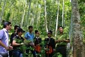 Hàng loạt vi phạm, khuyết điểm tại Tổng công ty Lâm nghiệp Việt Nam