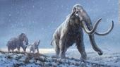 DNA cổ xưa nhất được trích xuất từ xác một con voi ma mút niên đại hơn một triệu năm tuổi
