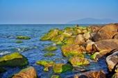 Mùa rêu xanh tại Rạn Nam Ô Đà Nẵng hút du khách đầu năm
