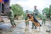 Chuyện về những chú chó nghiệp vụ trong vụ giải cứu sạt lở đất ở Trà Leng
