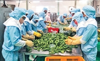 Cán cân thương mại hàng hóa của Việt Nam thặng dư 500 triệu USD
