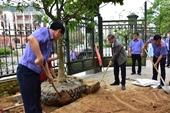 Thừa Thiên Huế phát động phong trào Mai vàng trước ngõ