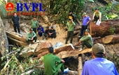 Lại phát hiện thêm vụ phá rừng quy mô lớn ở Đắk Lắk