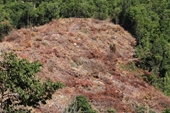 Thủ tướng yêu cầu tỉnh Khánh Hòa kiểm tra tình trạng phá rừng trái phép tại huyện Cam Lâm