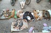 Hàng chục con chó, mèo bị đánh bả chết la liệt