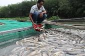 """Điều tra cá """"lồng"""" chết trắng trên sông Sài Gòn, thiệt hại hàng tỉ đồng"""