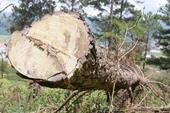 Xử lý trách nhiệm nhiều chủ rừng để xảy ra lấn chiếm đất rừng mức độ lớn