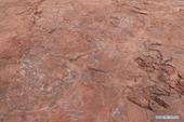 Sàn nhảy của khủng long được phát hiện tại Trung Quốc