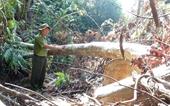 Phê chuẩn khởi tố 5 cán bộ liên quan vụ phá rừng quy mô lớn ở Phú Yên