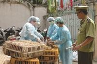 """Hơn 150 nhân viên thú y ở Hà Nội """"bất ngờ""""  không có việc làm"""