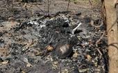 Hãi hùng phát hiện thi thể cháy hoàn toàn gần như thành tro