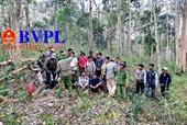 """Hiện trường 37 bị can cưa hạ """"tan hoang"""" rừng tại khu Bảo tồn thiên nhiên Ea Sô"""