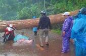 Mưa lớn, giông lốc quật ngã cây rừng, đè hai người phụ nữ thương vong
