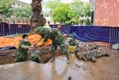 Phát hiện 358 quả bom bi trong khu vực UBND TP Hải Dương