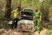 Khởi tố vụ án nuôi nhốt 17 cá thể động vật rừng nguy cấp quý, hiếm