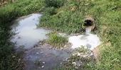 Công ty TNHH Chế biến thực phẩm hàng ngày Đà Lạt bị phạt vì xả bẩn ra môi trường