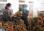 Vượt cơn bão dịch COVID-19, Bắc Giang xuất khẩu vải thiều sang Nhật Bản