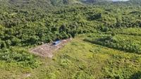 Dự án lấy gần 250ha đất, sau 5 năm chỉ nuôi mấy chục con bò