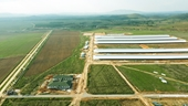 """Siêu dự án trang trại của Vinamilk tại Lào sẽ """"cho sữa"""" vào đầu năm 2022"""